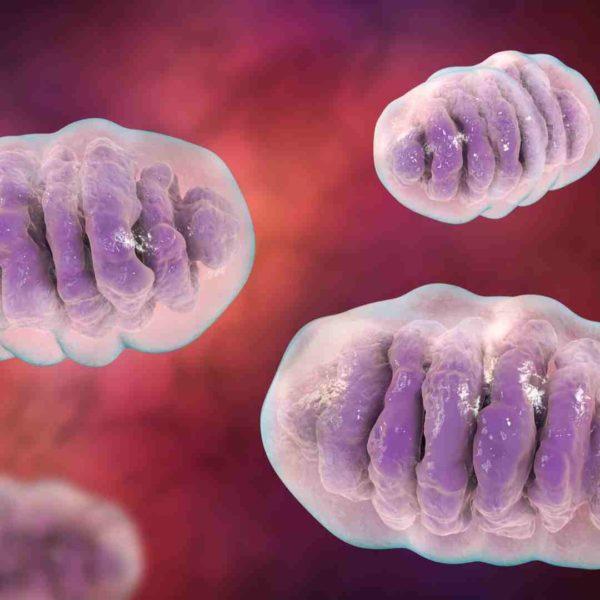 Mitochondria Support