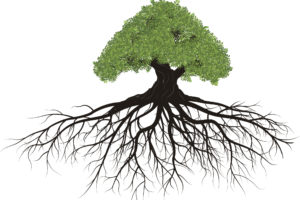 root cause, functional medicine, sibo treatment, sibo relapse, Dr Laura Paris, Monterey, acupuncture