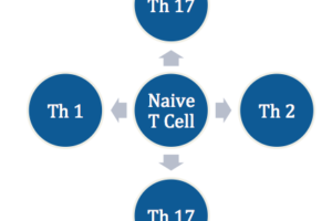 T cell dominance, T helper cell, immune, Th-2 dominance, inflammation, Th2 dominance